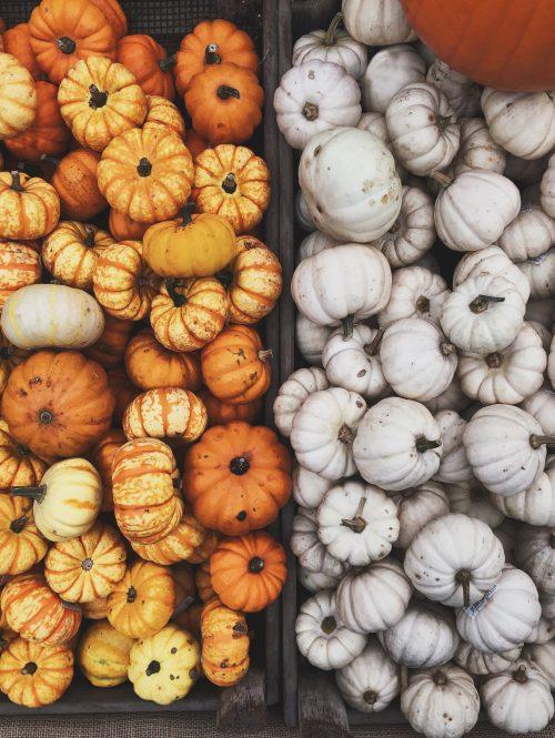 zucche arancioni e bianche